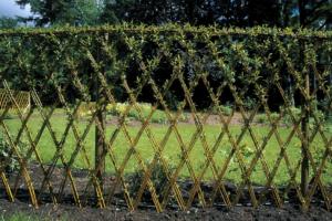 Живая изгородь из ивы – как создать зеленый забор на даче