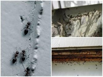 В каком утеплителе не живут муравьи?